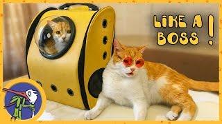 Распаковываем посылки для котика Рыжика