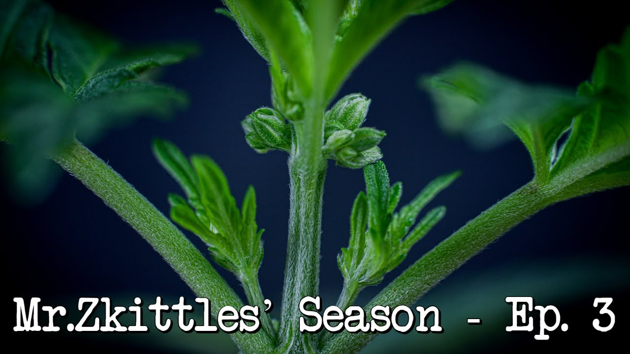 Mr.Zkittles Season - Sex