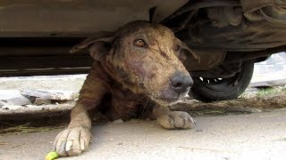 Hairless street dog just wants love – Pepper's story