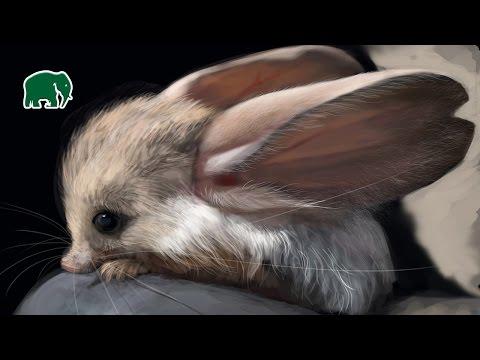 Top 10 Evolutionarily Unique Animals | Air Land Sea