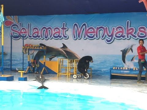 Dolphins at Indonesian circus suffer out of water next to performing bear