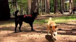 愛犬めぐと富士山、河口湖へ。 富士芝桜まつり会場は犬はNGですが、綺麗...