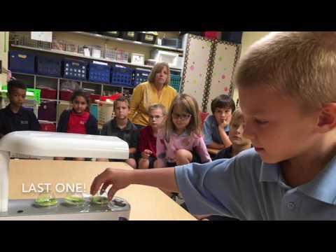 Skycrest Christian School:  First Grade AeroGardens