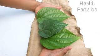 Only 3 Leaves Kill Diabetes