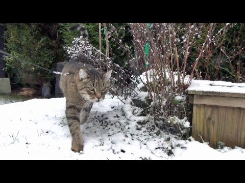 A Snowy Walk With George The Cat