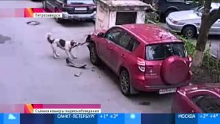 Собаки-бандиты погрызли джип