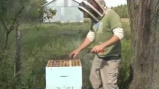 Les abeilles de Raphaël Fort.mpg