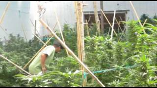 Philip Morris Property Emerald Triangle.avi