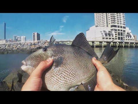 SUMMERTIME Fishing The AC JETTIES! (7 Species!) [5 New Species]