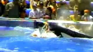 INCREDIBLE Un orque qui devient fou