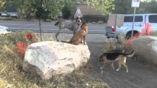 Dog Trainers Reno Hiking Off Leash