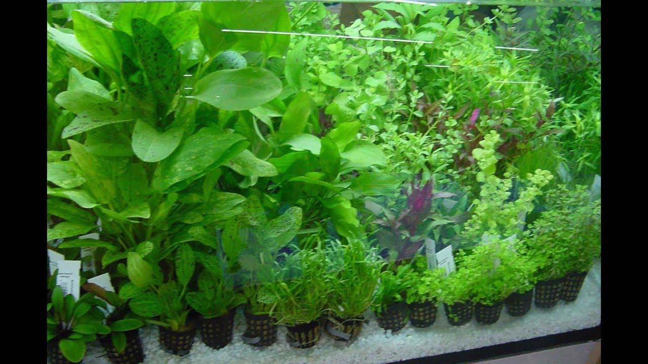 Шт. : зоомир малахитовый зеленый цена:. Шт. Уход за аквариумом средство зоомир купить. Зоомир сульфат. Зоомир унифлор аква-7. Цена: