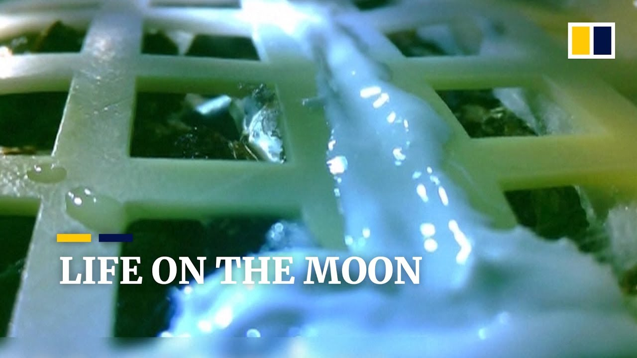 Chinese space mission brings first seeds to life on moon's surface