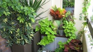 видео Как выбрать вьющиеся растения для балкона?
