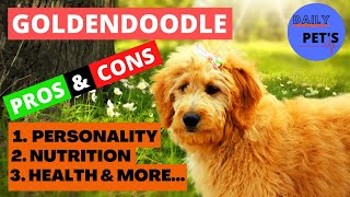 Things You Wish You Should Knew Before | Getting A Goldendoodle Dog | Daily Pets