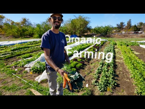 Simple Tips for starting an Organic Farm.