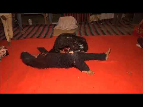 Maa kali ka Tandav  live Video vishal vashisaht