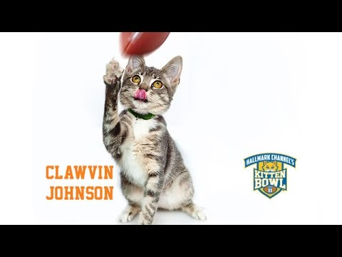 Thumbnail for Cat Video Kitten Bowl II - Clawvin Johnson - Player Profiles