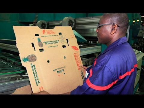 Groupe Rossmann : Le Spécialiste de l'Emballage en Carton Ondulé en Europe et en Afrique
