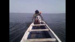 Tilapia Fish Farming in Ghana | Fast-Growing Tilapia Fingerlings | Fish Farm Training - Lake Volta