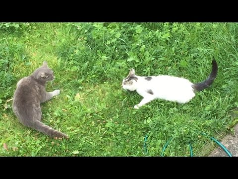 Cat attack - Two cats in a standoff in my garden.