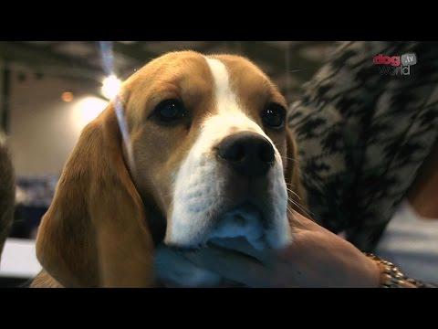 Midland Counties Dog Show 2016 - Hound group Shortlist