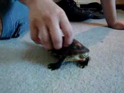 Tickling My Turtle