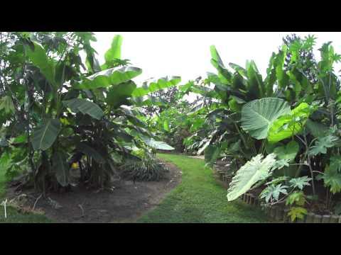 A longer look at a Subtropical garden in Ohio - 2014