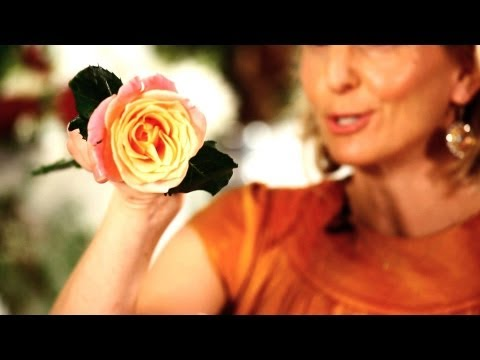How to Make Roses Open Faster  Wedding Flowers