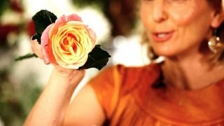 How to Make Roses Open Faster | Wedding Flowers(You already love Spotify, but do you know how to get the most out of it? Click here to learn all the Spotify Tips and Tricks you never knew existed., 2013-03-22T00:13:55.000Z)
