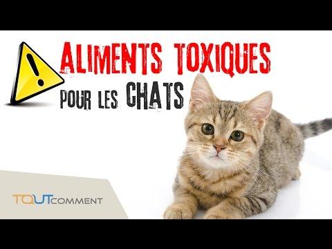 7 Aliments Toxiques Pour Les Chats