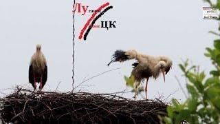 Как Луцк встречает русскоговорящих братьев из г. Луганск и Донецк?(Очень опасный город для тех кто не говорит на украинской и не возит в машине черно-красный флаг Бандеры!..., 2014-06-07T05:03:21.000Z)