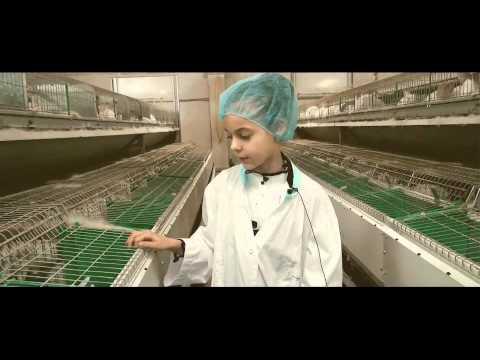 Сколько приносит кроличья ферма (5 фото + 3 видео)