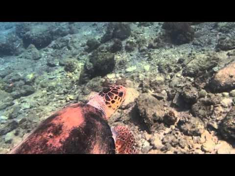 Loggerhead Turtle In Sour/Tyre Lebanon