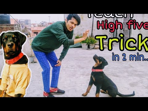 Train Your Dog High Five 🖐️ (Hello) in 2min || Rottweiler ||  Subscribe and share Review reloaded,