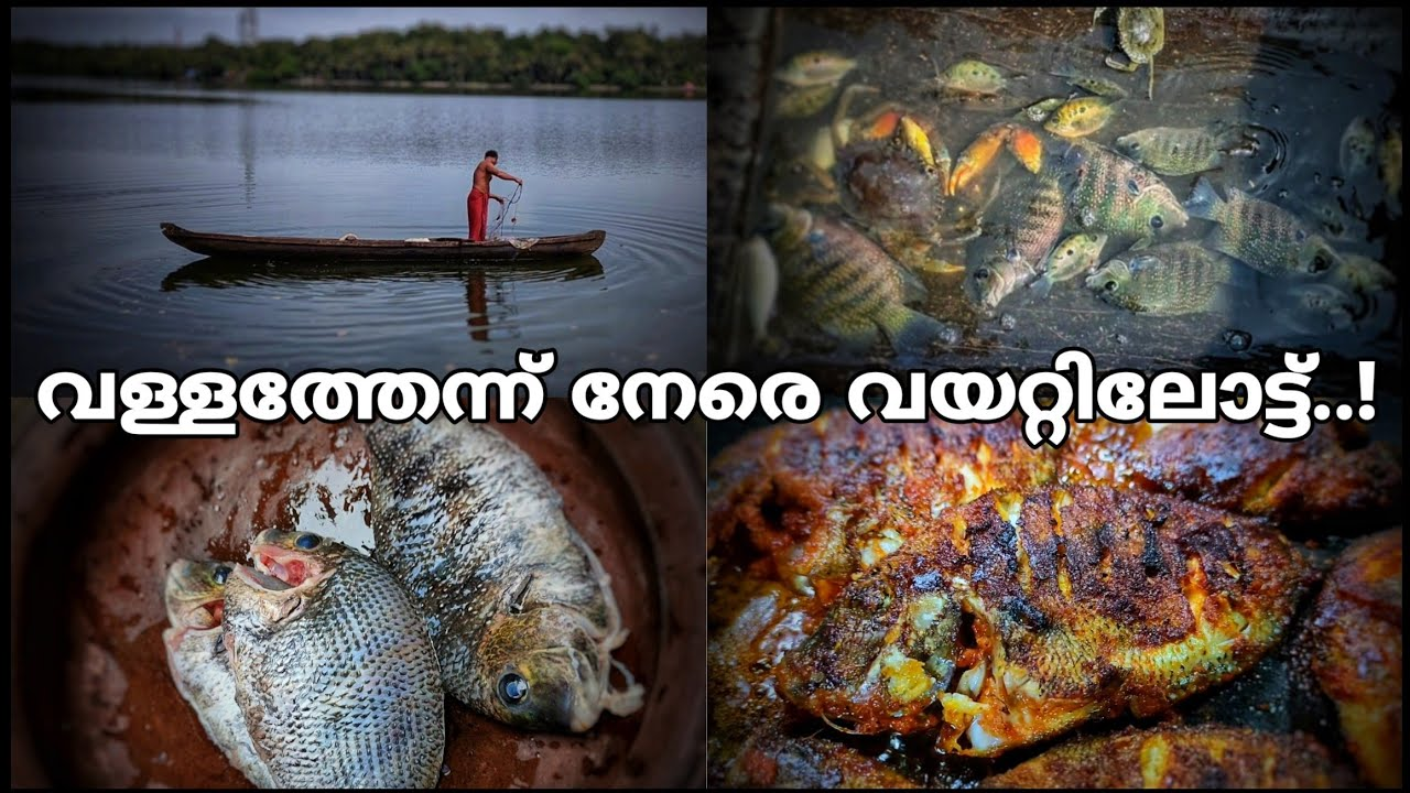 പിടക്കുന്ന മീൻ വാങ്ങി പൊള്ളിച്ചാലോ | fishing | fish | fish landing | kollam | You map traveller