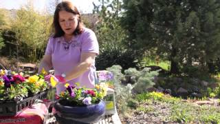 How To Fill Pansy Planters : Grow Guru