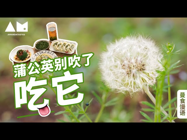[Eng Sub]等蒲公英变成毛球多可惜,趁早吃了吧! how to eat dandelions leaves in four different ways丨曼食慢语