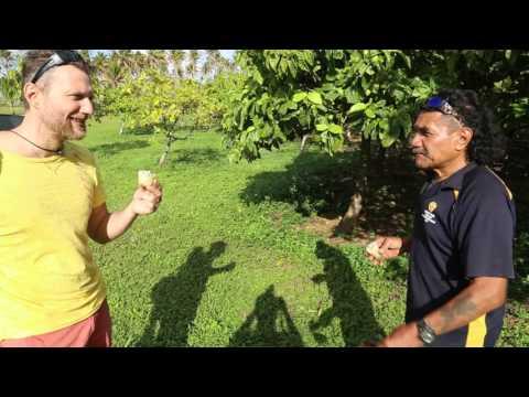 Niue Ferme de Noni / Niue Noni farm