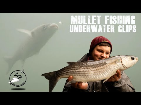 Float Fishing For Mullet (Underwater Clips)