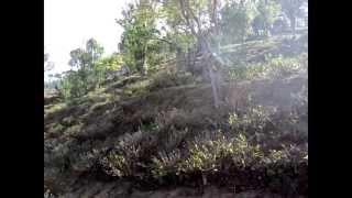 Tea Estates in Darjeeling, India.