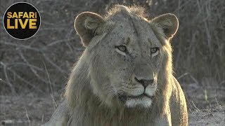 safariLIVE - Sunrise Safari - November 16, 2018
