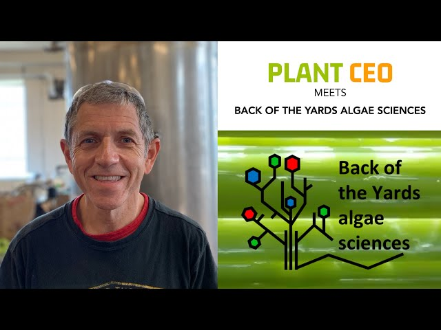 PLANT CEO #13 - Potential of Algae: the blue colour in M&M's to high levels of protein