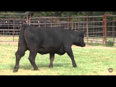 Seven T Farms Tag 3033