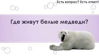 Где живут белые медведи? [78]