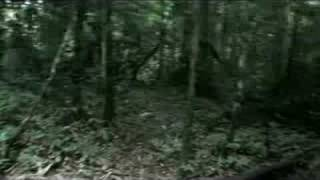 scary jungle treking   taman negara malaysia