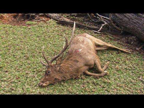 Hunting Rusa deer in New Caledonia part 25