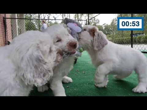 60 Seconds Compilation of Cute Puppies #2