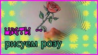 Рисуем цветы#01-  Как нарисовать розу - Простые рисунки(Как нарисовать РОЗУ - учимся рисовать цветы. Контур можно рисовать простым мягким карандашом, или , как в..., 2016-10-21T06:22:57.000Z)