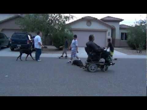 Trained dogs  European Doberman Pinscher  Arizona's Dark Kiera  Protection Dog